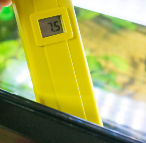 コリドラス水槽のpH値