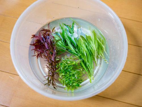 購入した水草4種