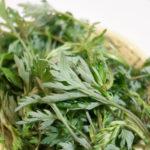 身近な山菜、摘んできたヨモギで団子づくり!