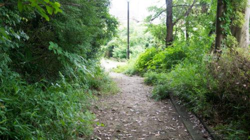 ドバミミズ採集スポットの公園